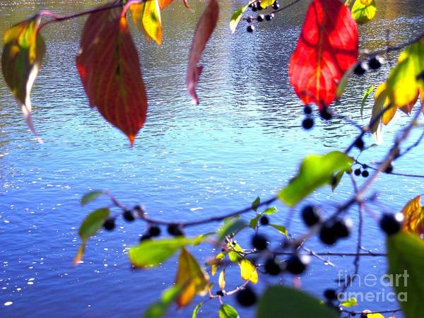 Water Poster featuring the photograph Refreshing View by Sybil Staples