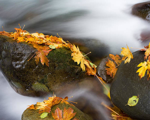 Autumn Poster featuring the photograph Respite by Mike Dawson