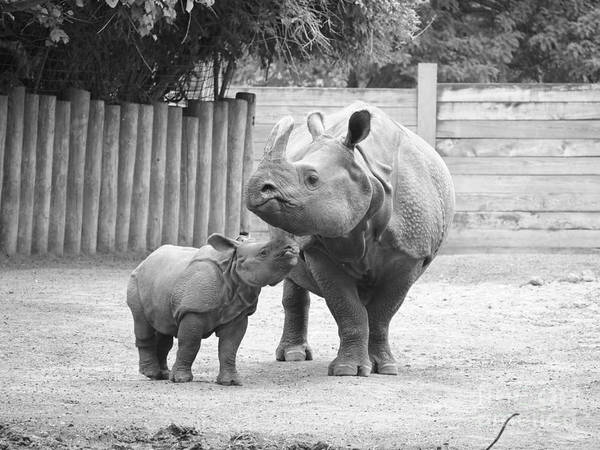 Rhino Poster featuring the photograph Rhino Mom And Baby by Jennifer Craft