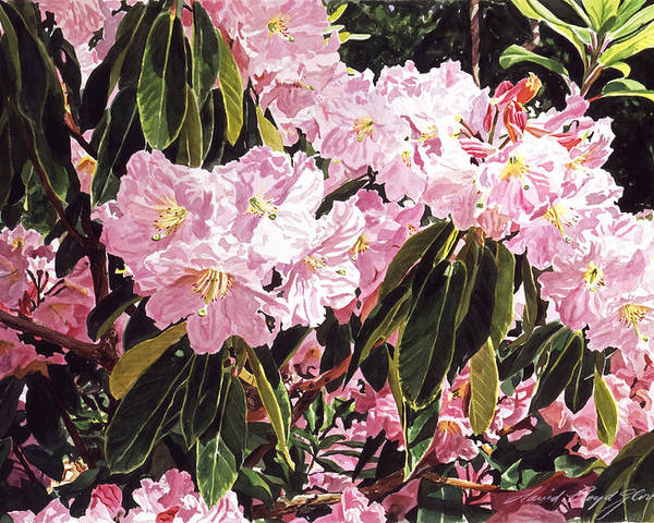 Flowers Poster featuring the painting Rhodo Grove by David Lloyd Glover