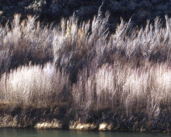 Landscape Poster featuring the photograph River Sage by Lynard Stroud