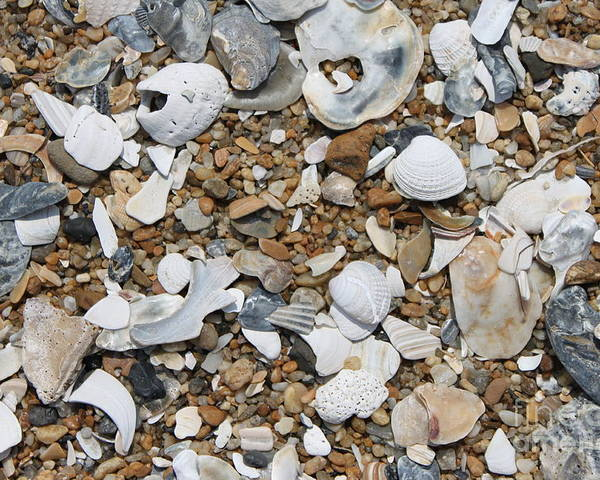 Beach Poster featuring the photograph Rock N Shells by Marcie Daniels