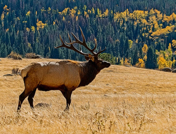 Animals Poster featuring the digital art Rocky Mountain Bull Elk by Ernie Echols