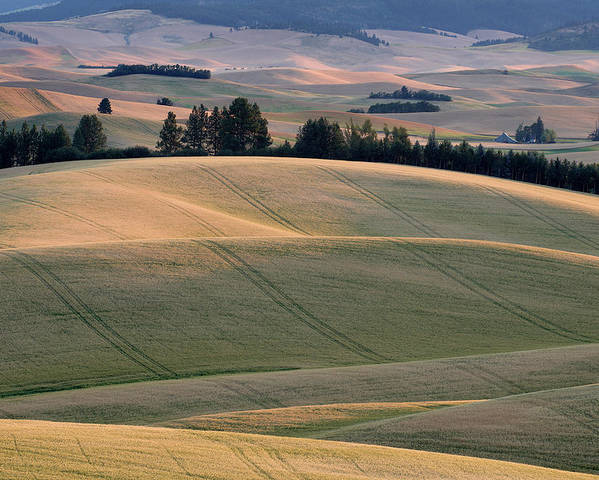 Palouse Poster featuring the photograph Rolling Hills Of The Palouse by Jerry McCollum