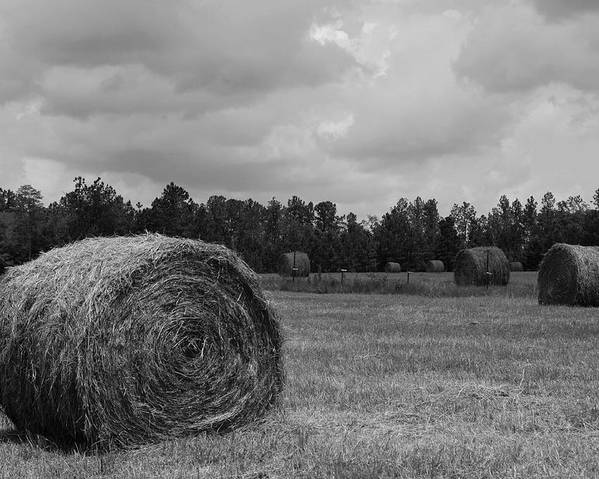 Hay Field Poster featuring the photograph Rolls Of Hay by Southern Photo