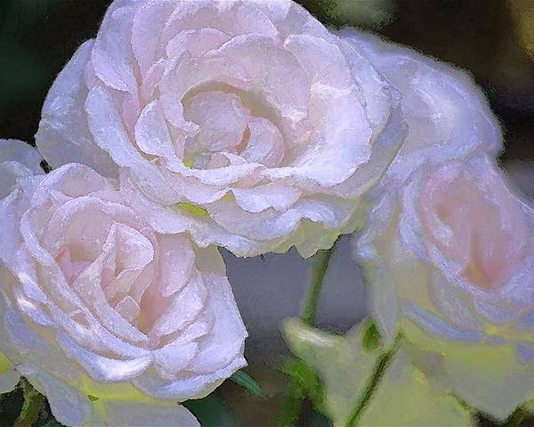 Floral Poster featuring the photograph Rose 120 by Pamela Cooper