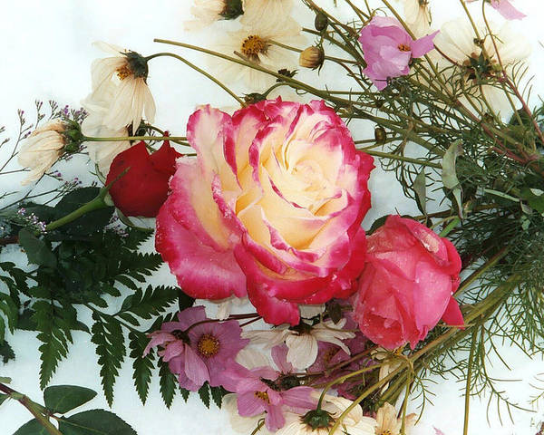 Roses Poster featuring the photograph Roses In The Snow by Bob Gardner