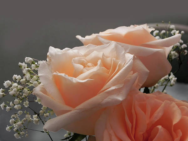 Roses Poster featuring the photograph Roses Light by Francesa Miller