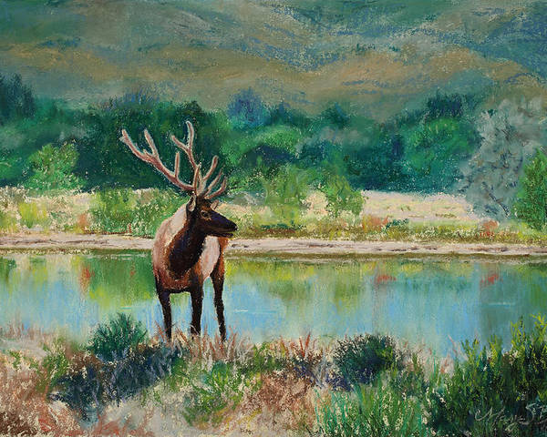 Elk Poster featuring the painting Royal Velvet by Mary Benke