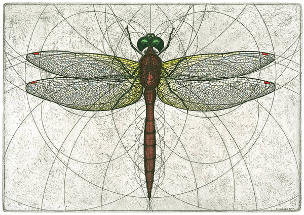 Ruby Poster featuring the painting Ruby Meadowhawk Dragonfly by Charles Harden