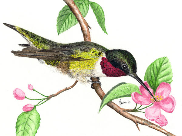 Hummingbird Poster featuring the painting Ruby-throated Hummingbird by Lynn Quinn
