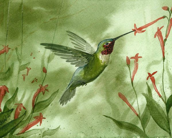 Birds Poster featuring the painting Ruby Throated Hummingbird by Sean Seal