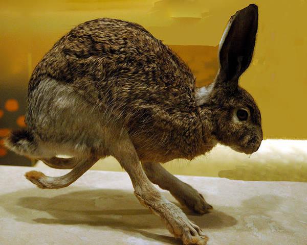Jack Rabbit Usa >> Run Jack Rabbit Run Poster