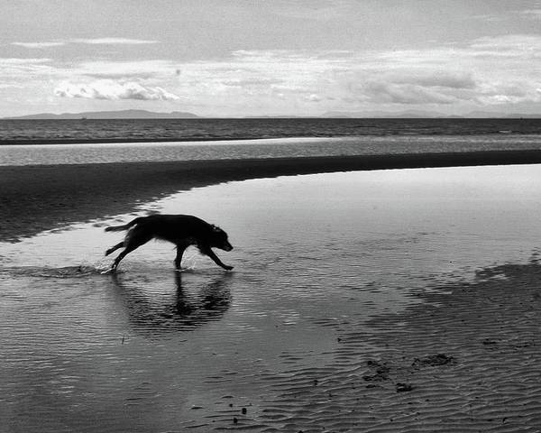 Abstract Poster featuring the photograph Running Dog Bw by Lyle Crump