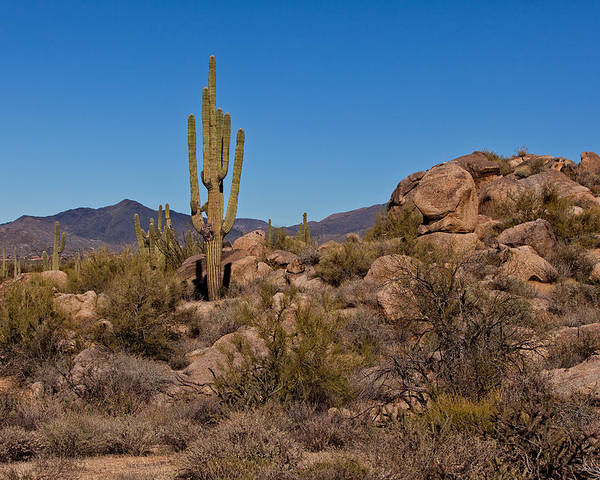 Hike Poster featuring the photograph Saguaro Century by Dennis Eckel