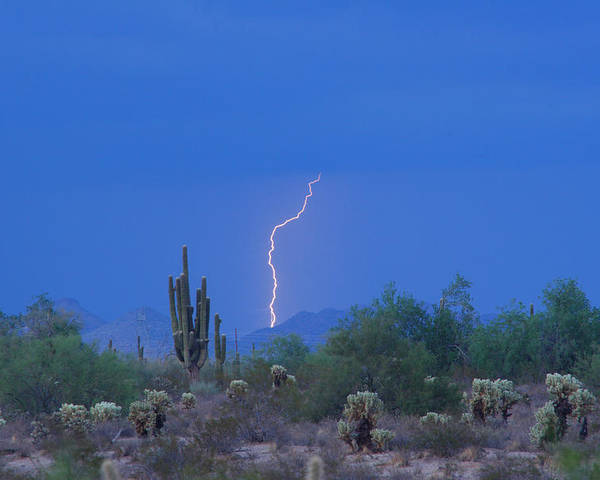 Lightning Poster featuring the photograph Saguaro Desert Lightning Strike Fine Art by James BO Insogna