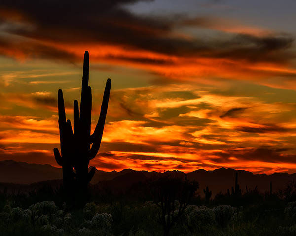 Arizona Poster featuring the photograph Saguaro Sunset H51 by Mark Myhaver