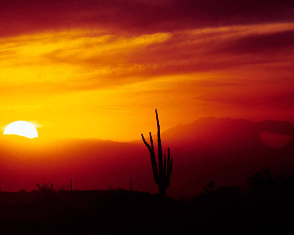 Arizona Poster featuring the photograph Saguaro Sunset by Randy Oberg