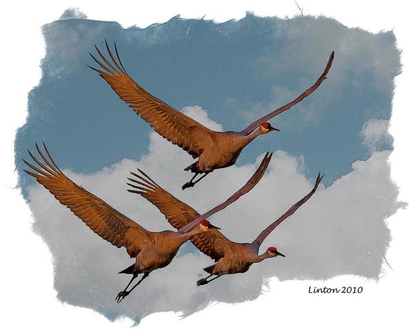 Sandhill Cranes Poster featuring the digital art Sandhill Cranes 3 by Larry Linton