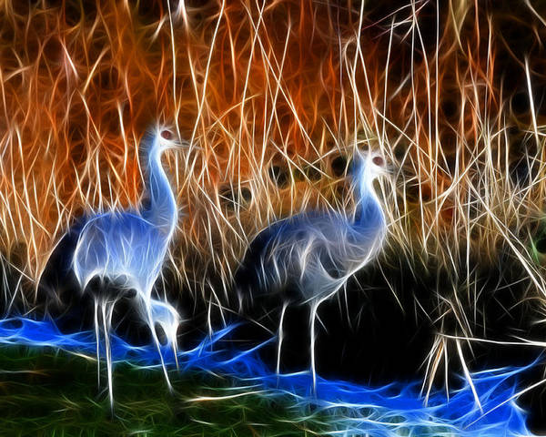 Snadhill Cranes Fractal At George C. Relfel Refuge Poster featuring the photograph Sandhill Cranes Pair Fractal by Lawrence Christopher