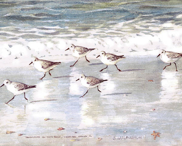 Sandpipers Poster featuring the painting Sandpipers On Siesta Key by Shawn McLoughlin