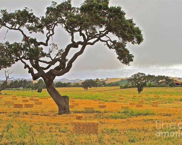 Ranch Poster featuring the photograph Santa Ynez Hayfield by Gus McCrea