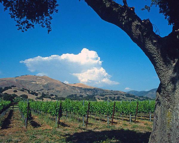 Landscape Poster featuring the photograph Santa Ynez Vineyard View by Kathy Yates