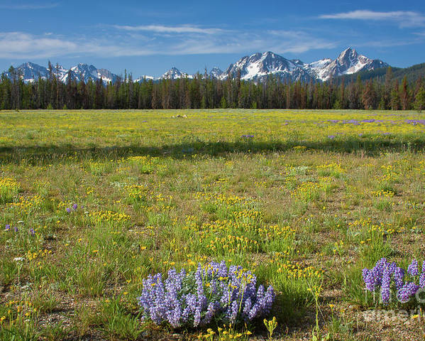 Wildflowers Poster featuring the photograph Sawtooths And Wildflowers by Idaho Scenic Images Linda Lantzy