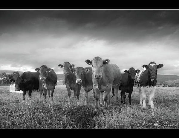 Horizontal Poster featuring the photograph Say Cheese!! by Paul Witterick Photography