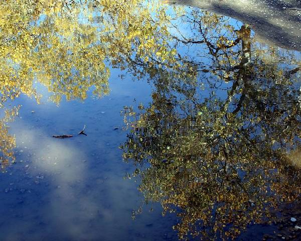 Reflections Poster featuring the photograph Scenes From A Mud Puddle by Tiffany Vest