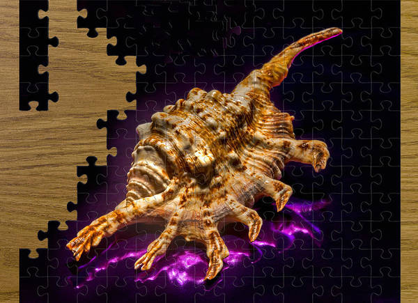 Scorpion Poster featuring the photograph Scorpion Shell Puzzle by Robert Storost