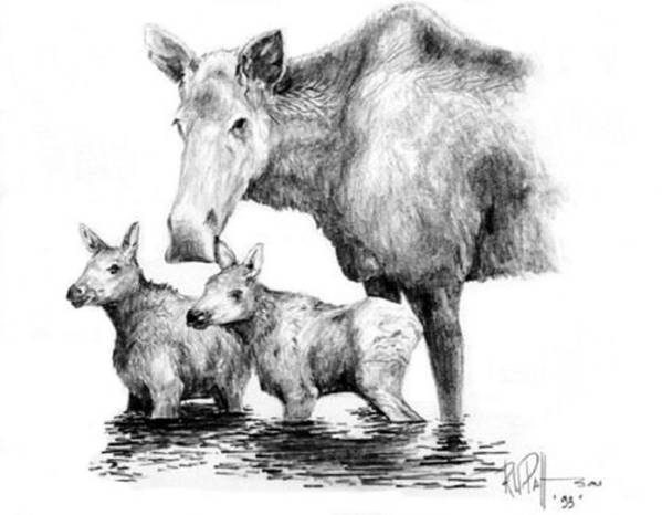 Wildlife Poster featuring the drawing Scruffy Moose Family by Bob Patterson