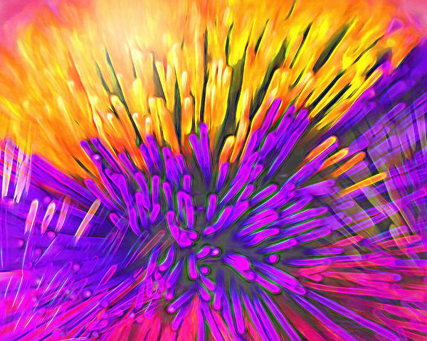 Anemone Poster featuring the photograph Sea Anemone Abstract - Kooosh Ball by Steve Ohlsen