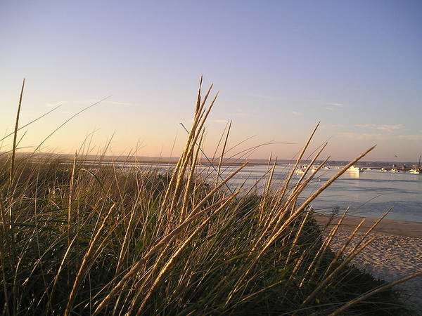 Sea Grass Poster featuring the photograph Sea Grass Overlooking The Harbor by Donna Davis
