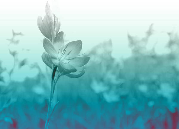Schizostylis Poster featuring the photograph Sea Green Haze by Barbara White