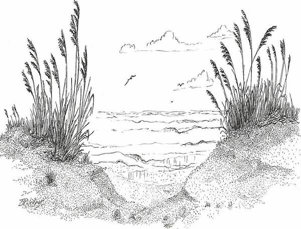 Sea Oats Poster featuring the drawing Sea Oats by Barney Hedrick