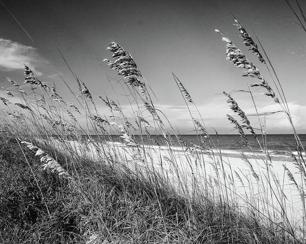Sea Oats Poster featuring the photograph Sea Oats In Black And White by Spencer Studios