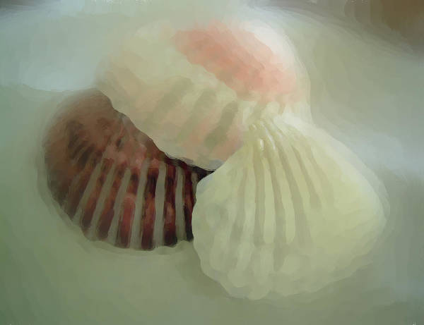 Sea Shells Poster featuring the photograph Sea Shells From The Sea Shore by Dottie Dees