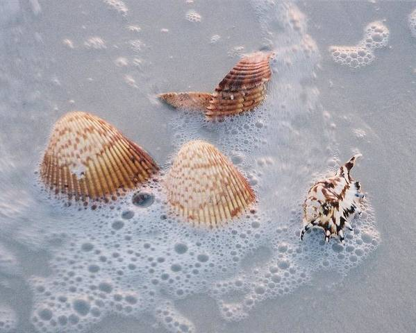 Sea Poster featuring the photograph Sea Shells In An Ocean Wave by Holly Eads