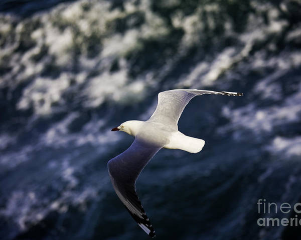 Seagull Poster featuring the photograph Seagull In Wake by Sheila Smart Fine Art Photography