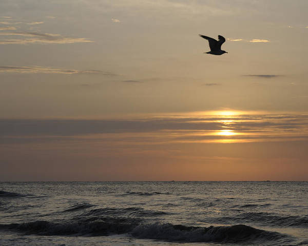 Seagull Poster featuring the photograph Seagull Over Atlantic Ocean At Sunrise by Darrell Young