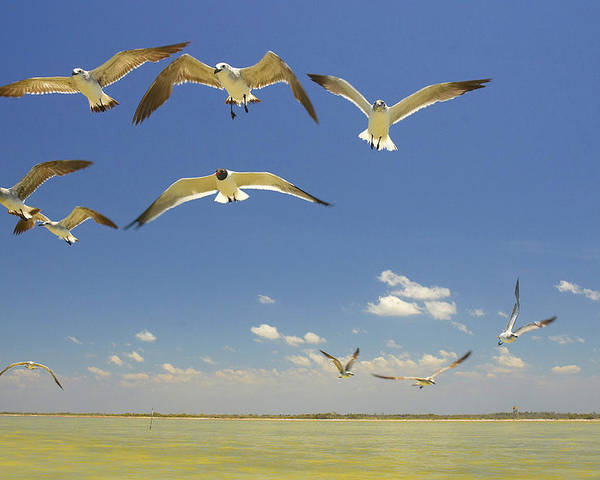 Seagull Poster featuring the photograph Seagulls by Elisa Locci