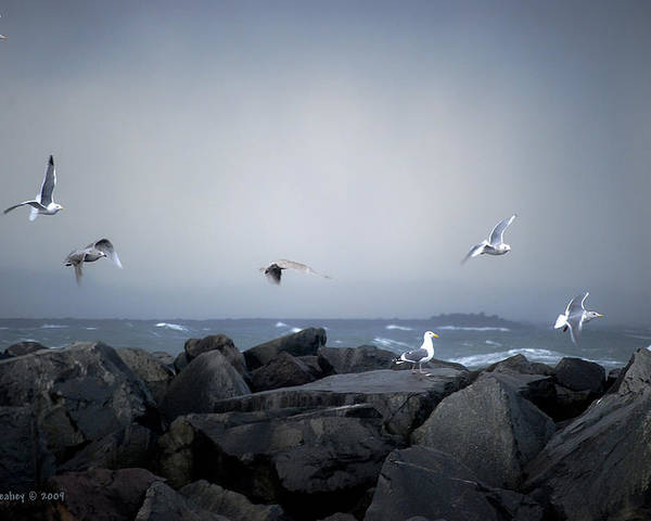 Landscape Poster featuring the photograph Seagulls In Flight by Larry Keahey
