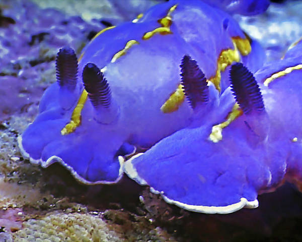 Ocean Poster featuring the photograph Sealife Underwater Snails by Christine Till