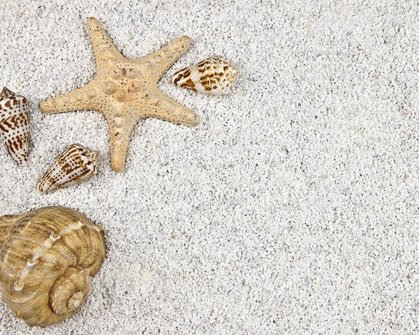 Starfish Poster featuring the photograph Seastar And Shells by Joana Kruse