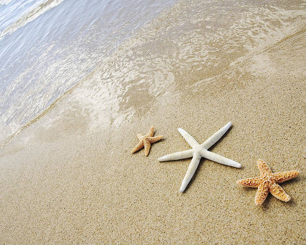 Afternoon Poster featuring the photograph Seastars On Beach by Mary Van de Ven - Printscapes