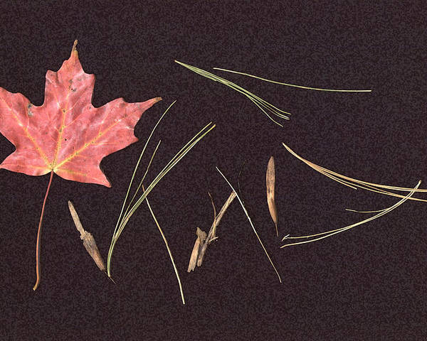 Leaf Poster featuring the photograph Secret Language Of The Forest by Kevin Callahan