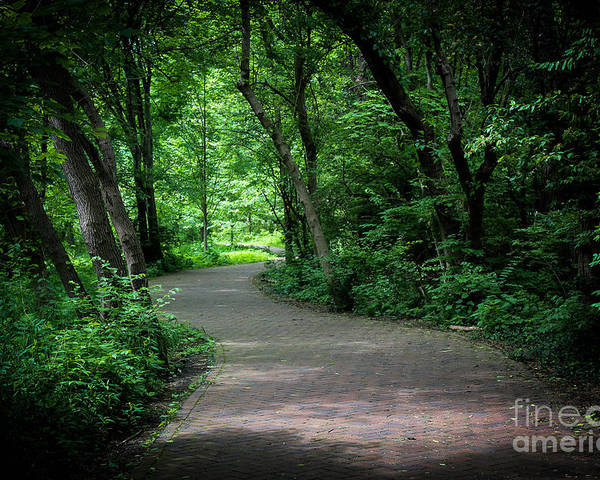 Trees Poster featuring the photograph Secret Path by Stephanie Hanson