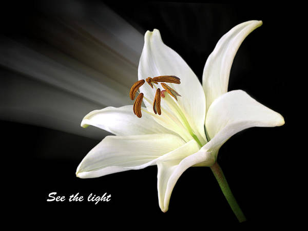 See The Light Poster featuring the photograph See The Light by Gill Billington