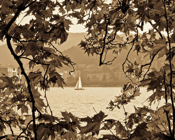 Sepia Poster featuring the photograph Sepia Sailboat by Andrea Barbieri